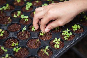 urban.farming.post2 bimboboy 300x200 - urban.farming.post2-bimboboy